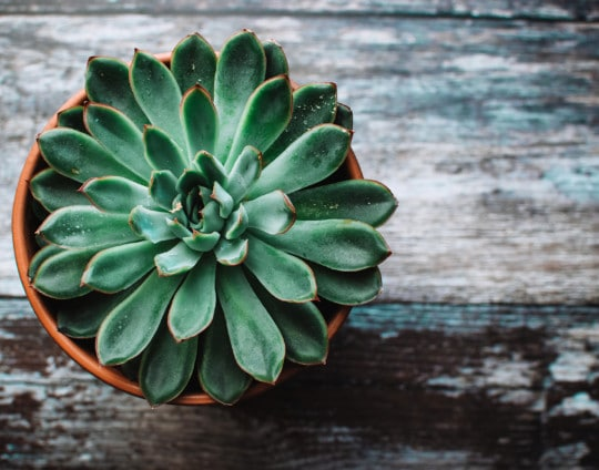 Las 10 mejores plantas para purificar el aire de tu casa y refrescar el ambiente