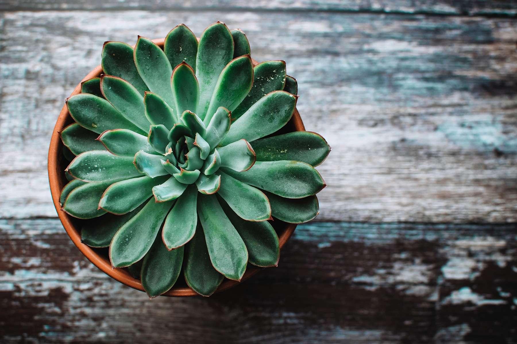 plantas-para-purificar-el-aire-actilife-actifemme