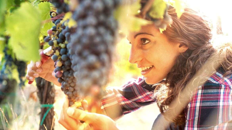 Resveratrol, el secreto antiedad
