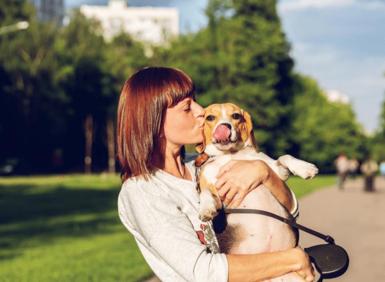 Probióticos para perros ¿Qué beneficios tienen?