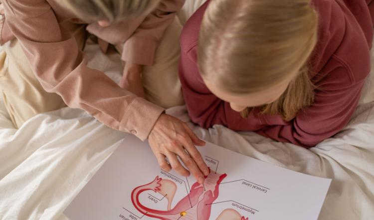 ¿Qué debemos saber sobre el útero?